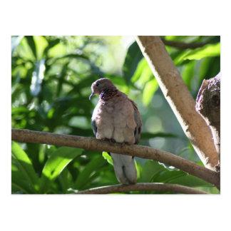 Paloma que se sienta en árbol postal