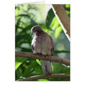 Paloma que se sienta en árbol tarjeta de felicitación