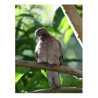 Paloma que se sienta en árbol tarjetas postales