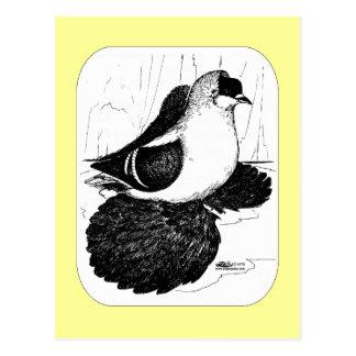 Paloma sajona 1978 del trago tarjetas postales
