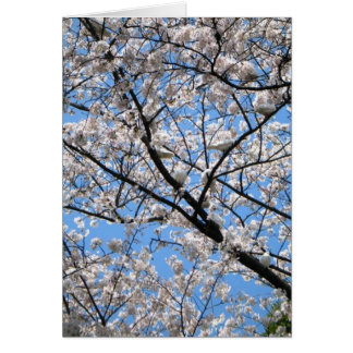 Palomas de paces en la Capilla-Keigo-NY Tarjeta Pequeña
