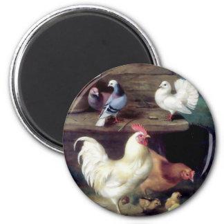 Palomas del pollo de la gallina del gallo imán redondo 5 cm