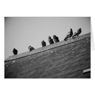 Palomas en un tejado tarjeta de felicitación