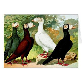 Palomas mensajeras en un grupo tarjeta de felicitación