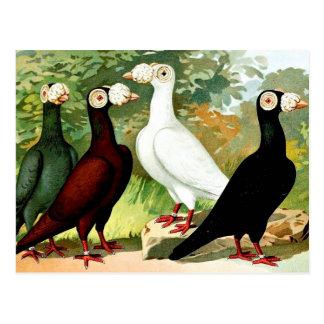 Palomas mensajeras en un grupo tarjeta postal