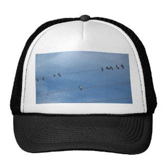 palomas que descansan el gorra