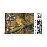 Palomas Stamps* real de Dovey Sello