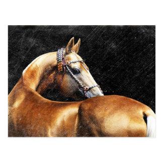 Palomino Akhal-teke stallion Postcard