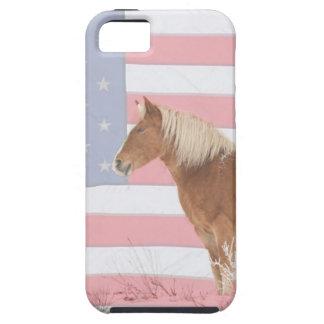 Palomino americano iPhone 5 carcasa