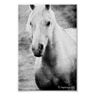 Palomino Black and White Faux Canvas Posters
