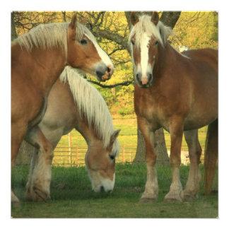 Palomino Draft Horses Invitation