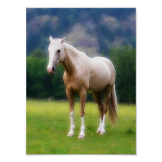Palomino Dream Horse Poster