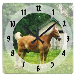 Palomino en pasto reloj cuadrado