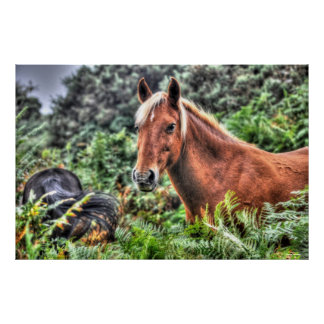 Palomino Flaxen-maned New Forest Horse Poster