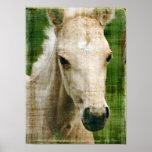 Palomino Foal Poster