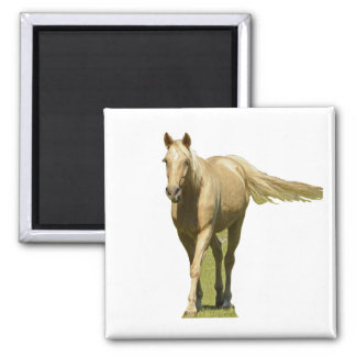 Palomino Horse 2 Inch Square Magnet