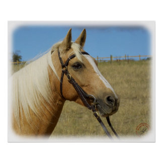 Palomino Horse 9R015D-184 Poster