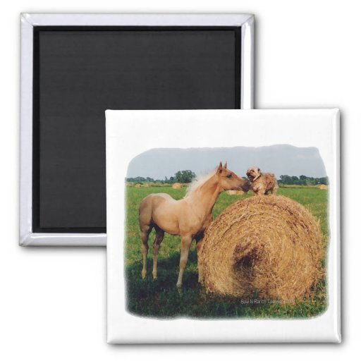 Palomino Horse and Dog Meeting 2 Inch Square Magnet