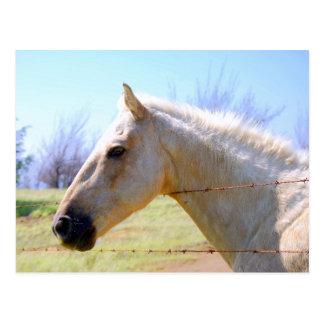 Palomino Horse at Fence Postcard