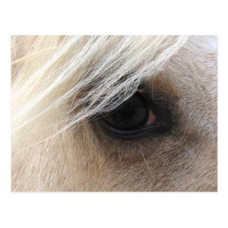 Palomino Horse Eye Postcard