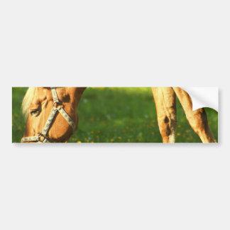 Palomino Horse Grazing Bumper Sticker