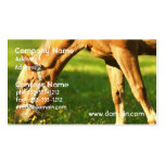 Palomino Horse Grazing Business Card