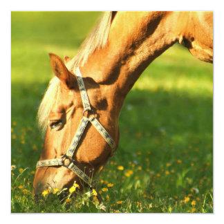 """Palomino Horse Grazing Invitations 5.25"""" Square Invitation Card"""