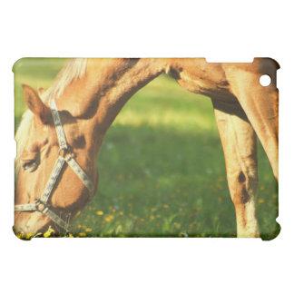 Palomino Horse Grazing iPad Case