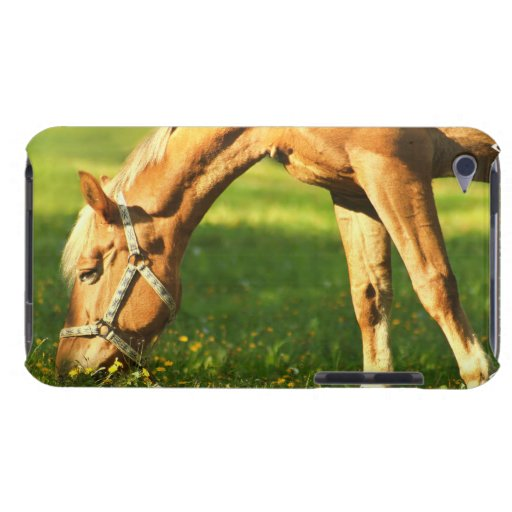 Palomino Horse Grazing iTouch Case iPod Touch Cases