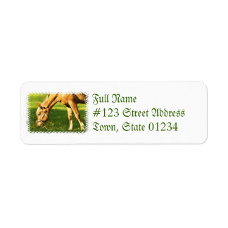 Palomino Horse Grazing Mailing Label Return Address Label