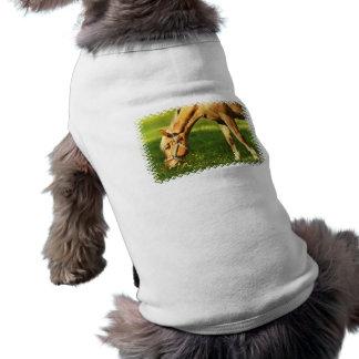 Palomino Horse Grazing Pet Shirt