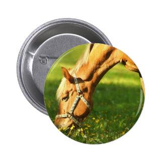 Palomino Horse Grazing Pin