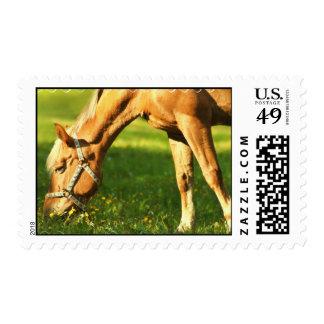Palomino Horse Grazing Postage Stamp