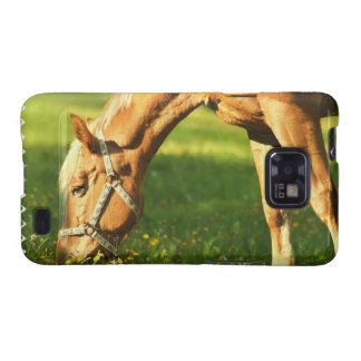 Palomino Horse Grazing Samsung Galaxy Case Galaxy S2 Cover
