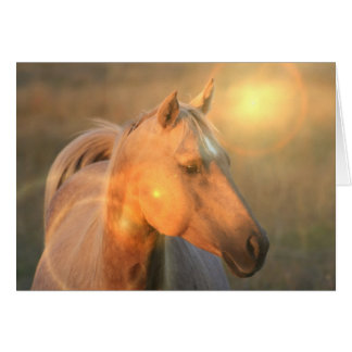 Palomino Horse in Light Card