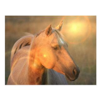 Palomino Horse in Light Postcard