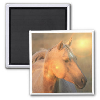 Palomino Horse in Light Square Magnet Magnet