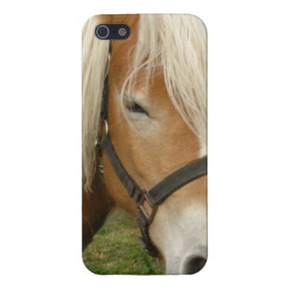 Palomino Horse iPhone 5 Covers