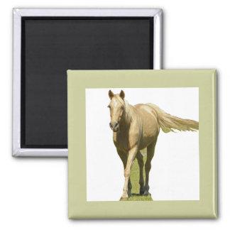 Palomino Horse Fridge Magnets