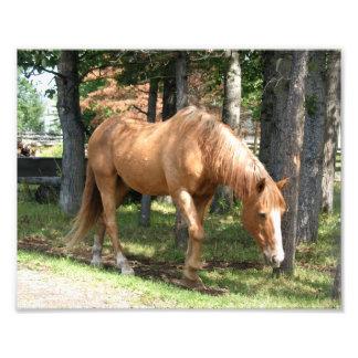 Palomino Horse Photographic Print