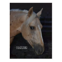 Palomino horse post card of horse named Banner