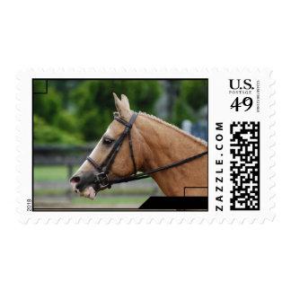 Palomino Horse Postage Stamp