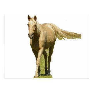Palomino Horse Post Cards