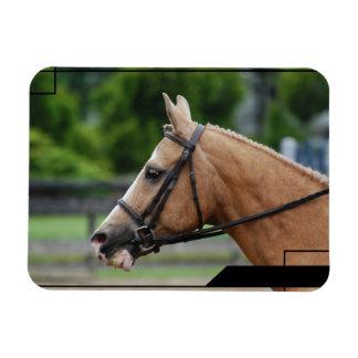 Palomino Horse Premium Magnet Rectangular Magnets