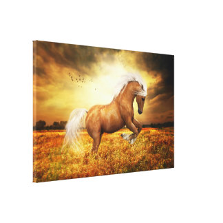 Palomino Horse Sundance Gallery Wrap Canvas