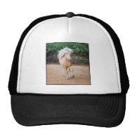 Palomino Horse Trucker Hats