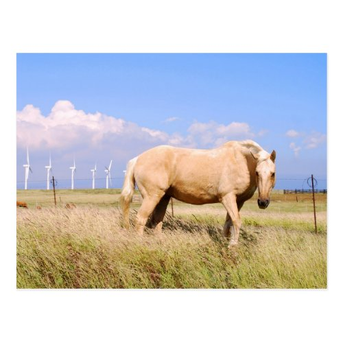Palomino Horse With Windmills Postcard