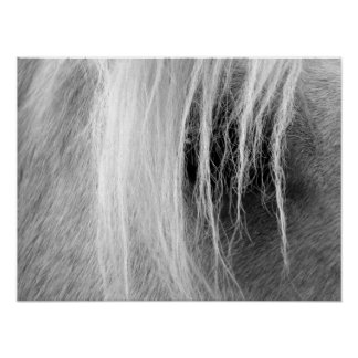 Palomino In Black and White Poster