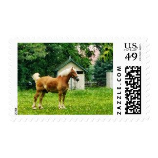 Palomino in Pasture Postage Stamp