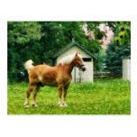 Palomino in Pasture Postcards